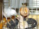 кормление 12-дневного птенца