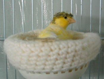 Как сделать гнездо для канарейки своими руками 145